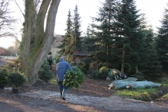 der Baum wird frisch abgeschnitten